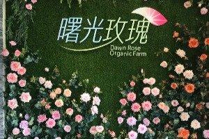 NÔNG TRẠI HOA HỒNG HỮU CƠ BÌNH MINH (曙光玫瑰SHUGUANG)
